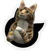 cat_icon001